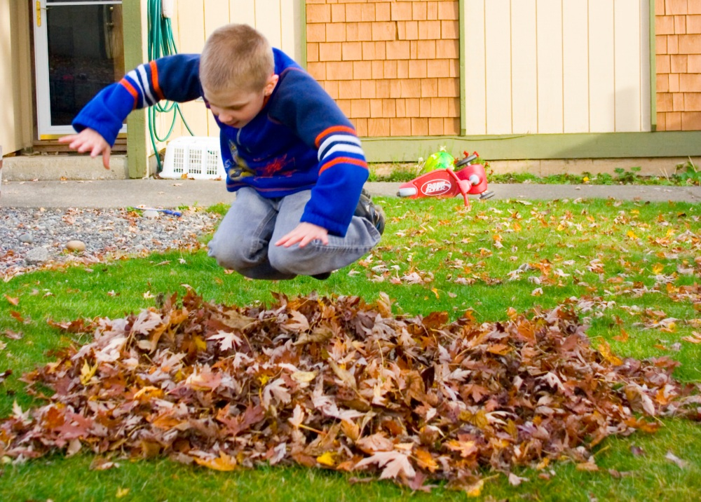 fall-leaves-085